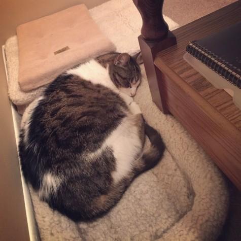 Asleep in his corner 'bedroom' last December.